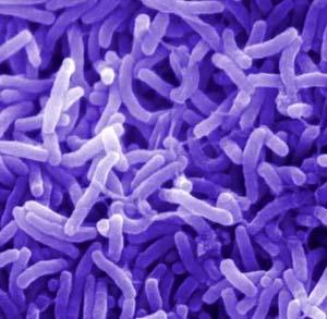 симптомы заражения организма паразитами и чистка